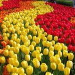 001 132893 original 150x150 - Туры в парк цветов Кёкенхоф