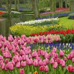 22 park cvetov kyokenkof v gollandii 150x150 - Туры в парк цветов Кёкенхоф