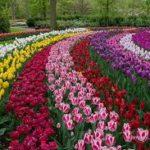 Bez nazvaniya 1 150x150 - Туры в парк цветов Кёкенхоф