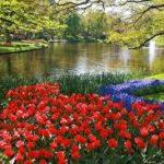 Bez nazvaniya 2 150x150 - Туры в парк цветов Кёкенхоф