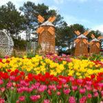KPVN 17.02 1 150x150 - Туры в парк цветов Кёкенхоф
