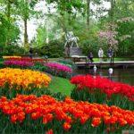 park cvetov kyokenxof 5 150x150 - Туры в парк цветов Кёкенхоф