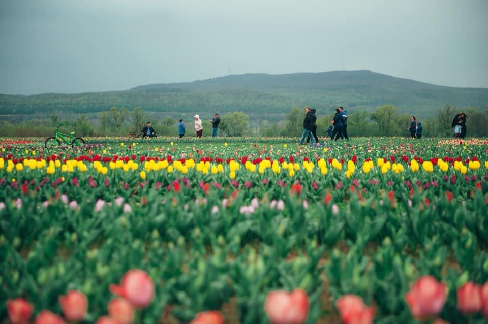 16183979536076cb017bd97 1200x1200 1 - Квітуча Буковина :Чернівці + долина тюльпанів
