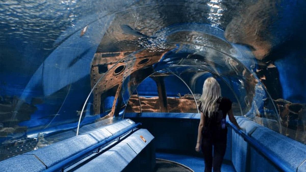 oceanarium 1280x720 2 - Подорож до Львова