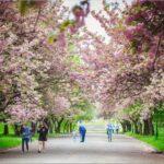 Mukachevo park 150x150 - Тури вихідного дня